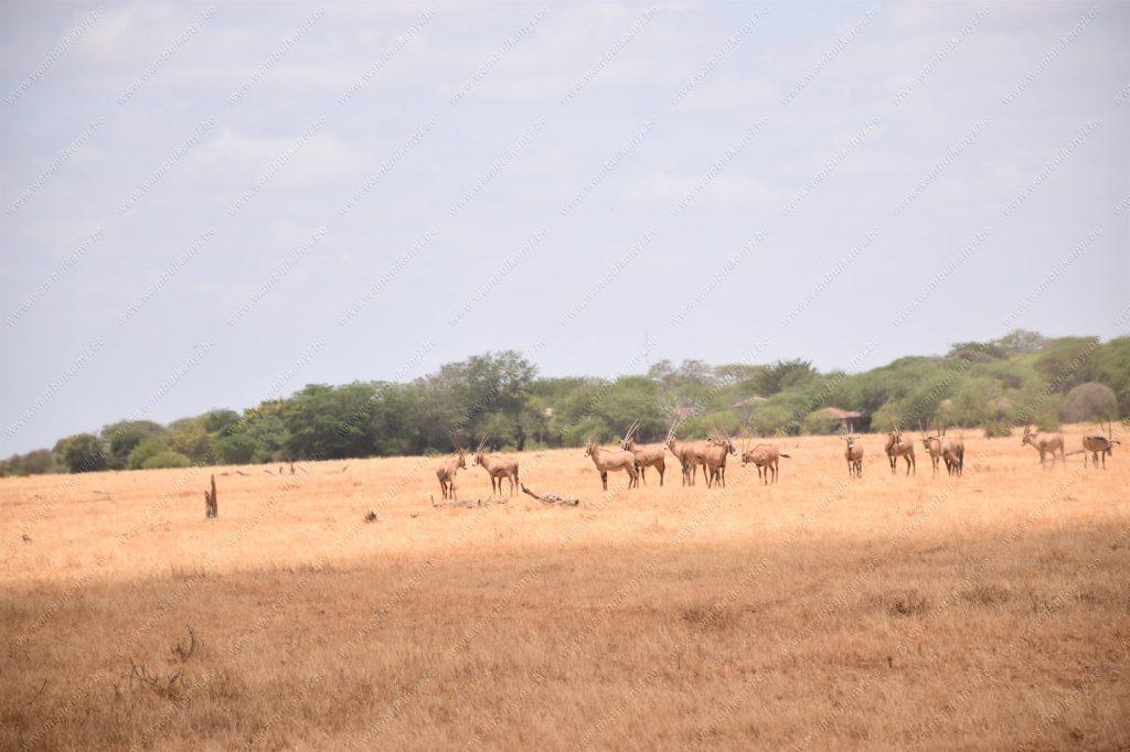 Tsavo National Park in Kenya