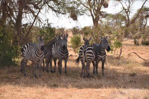 My Kenyan Safari Experience