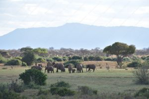 Tsavo East National Park Safari Experience