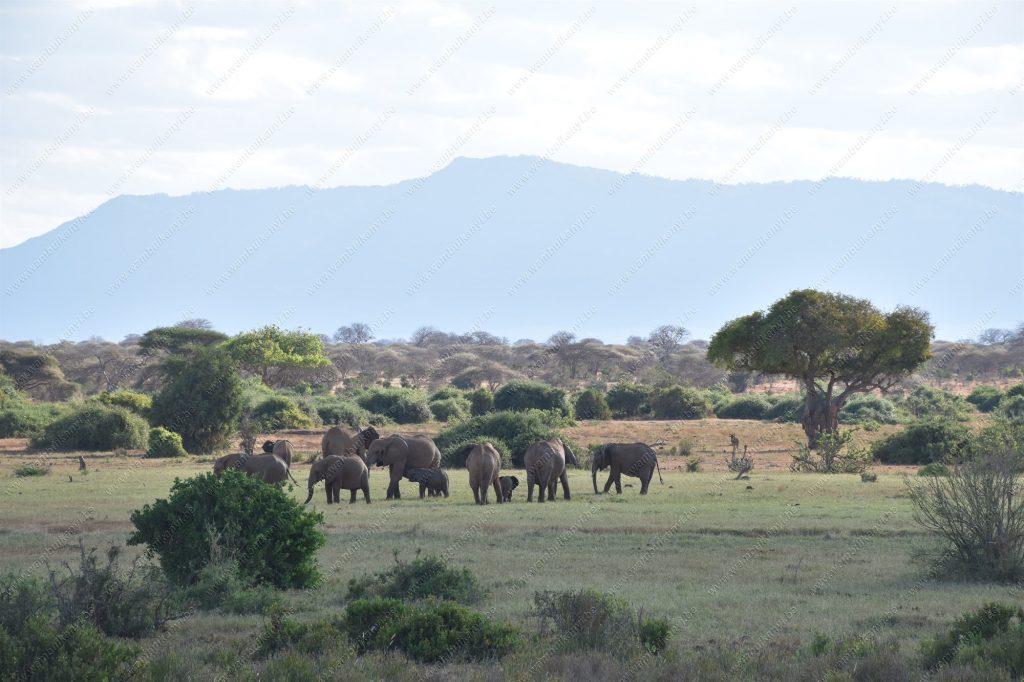 Tsavo East National Park Safari Experience