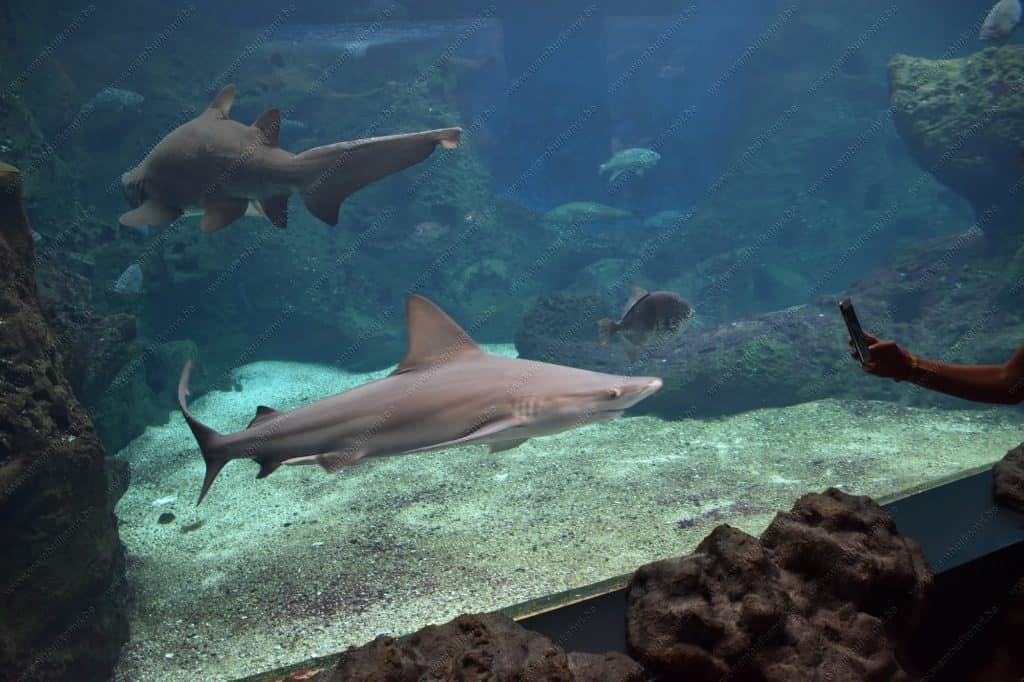Aquarium in Crete Island