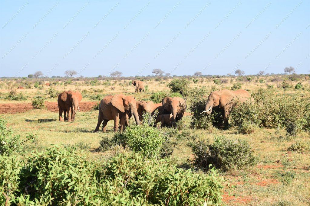 Red elephants of Tsavo National Park