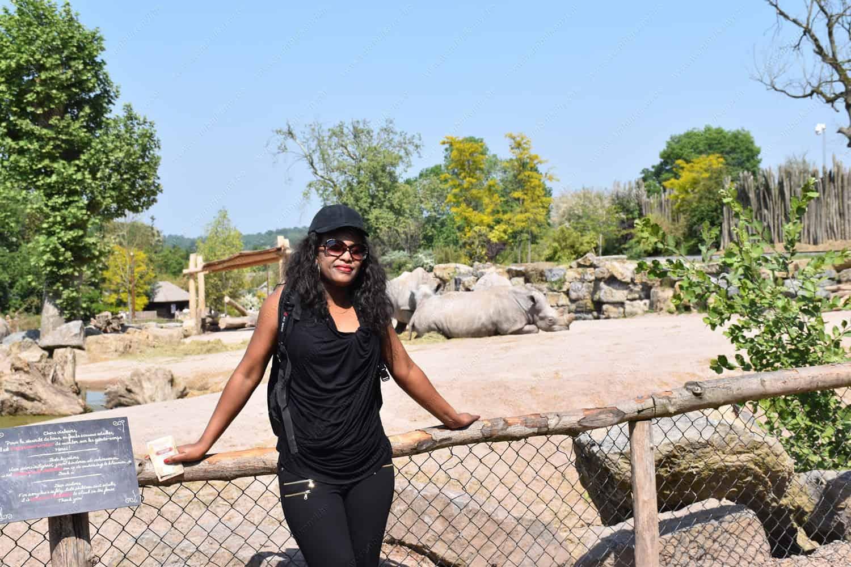 The Rhinos at the Pairi Daiza