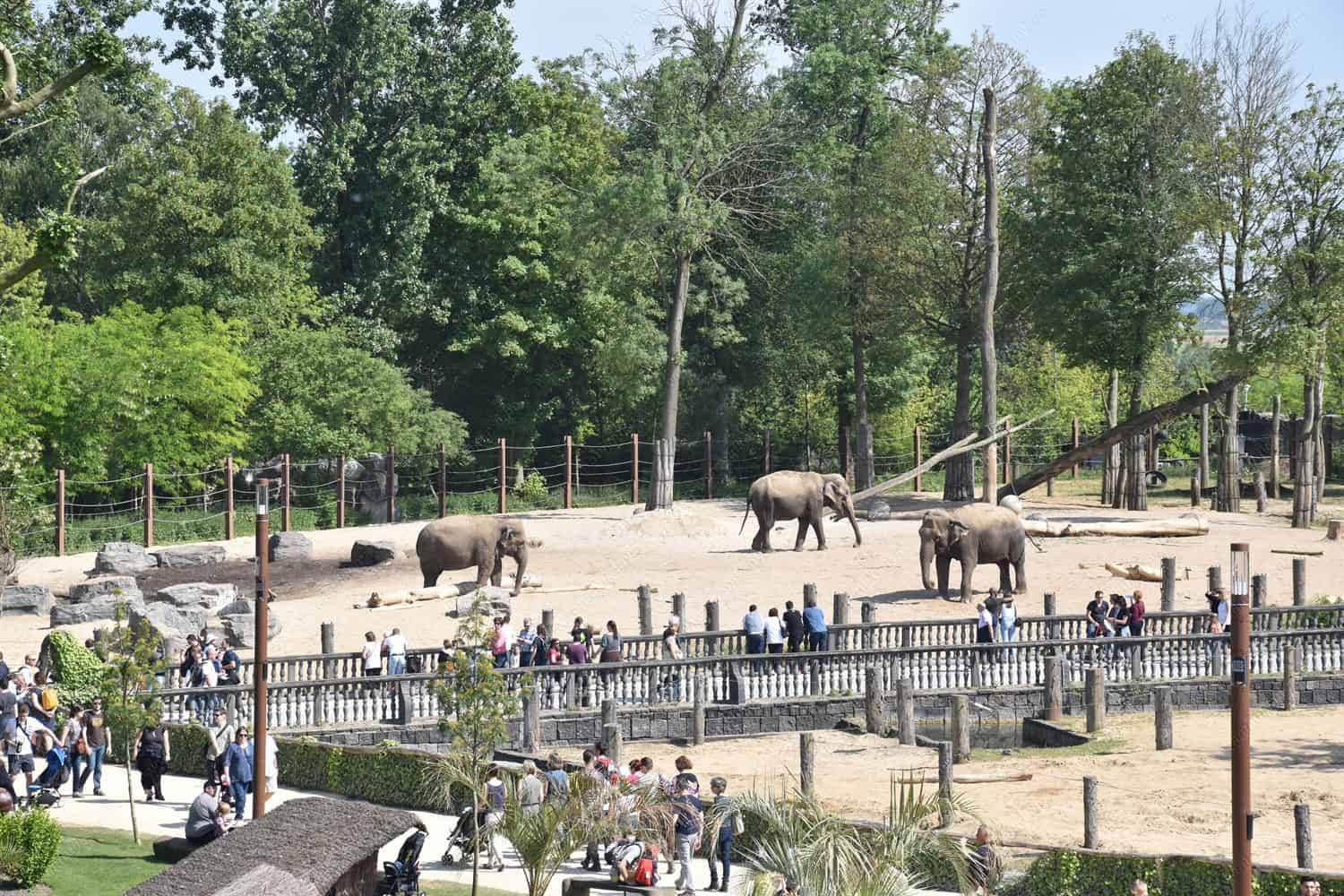Elephants in the zoo