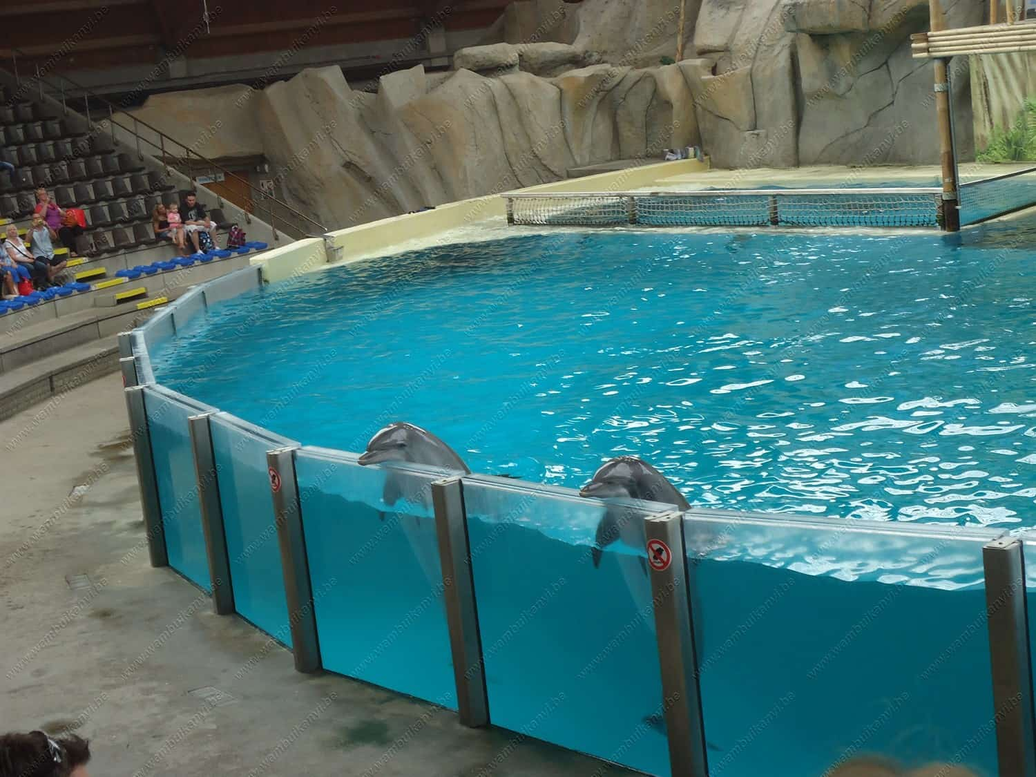 Dolphin Show Seapark Bruges