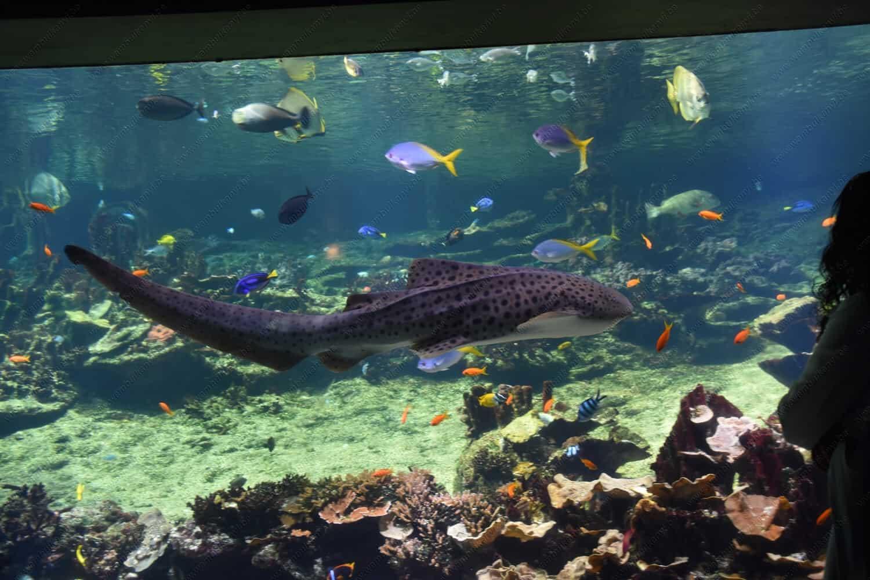 Aquarium in France