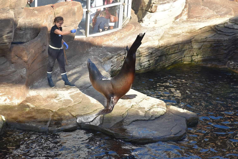Sea Lion Show In Nausicaa Sea Center