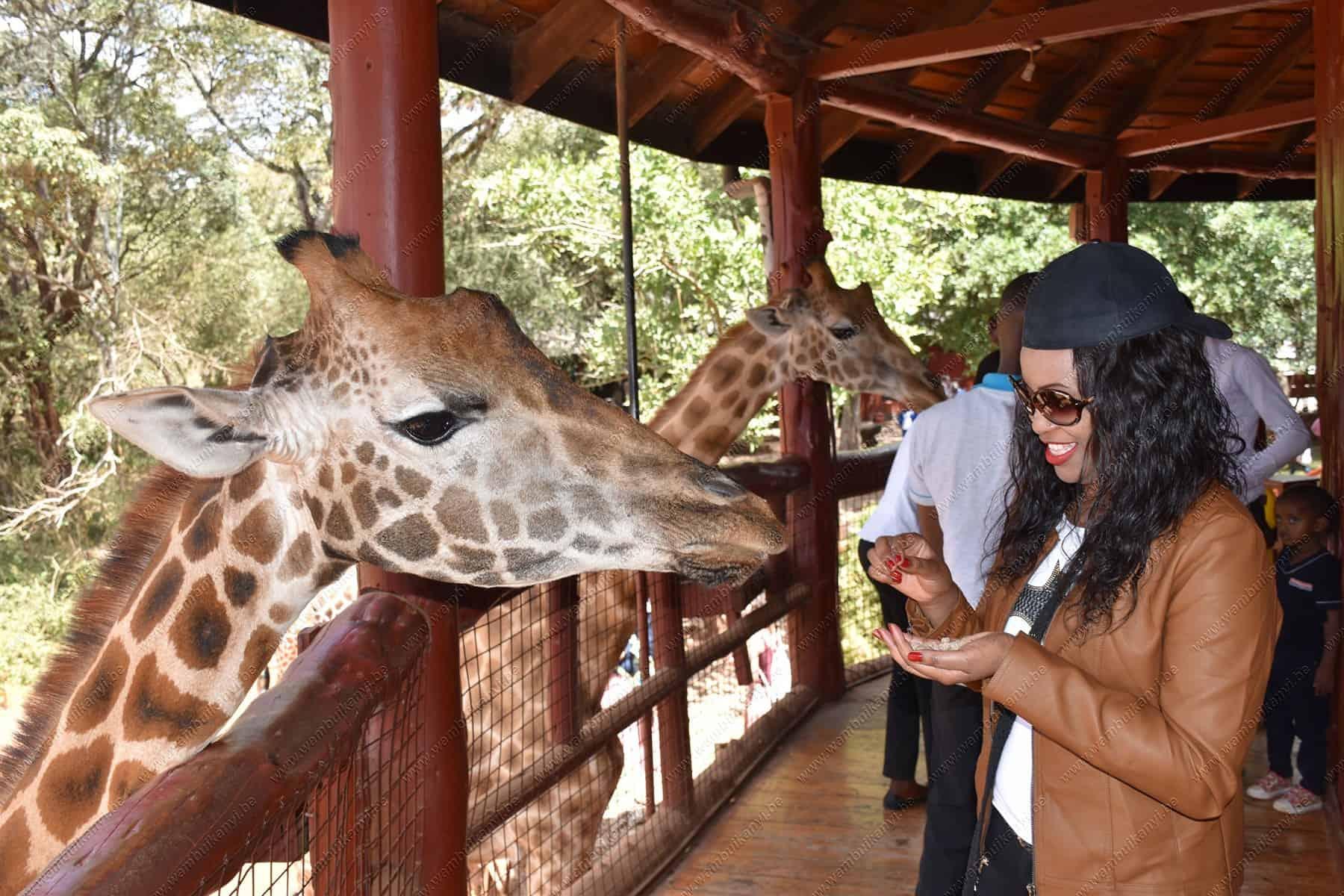 Giraffe Centre In Nairobi Experience